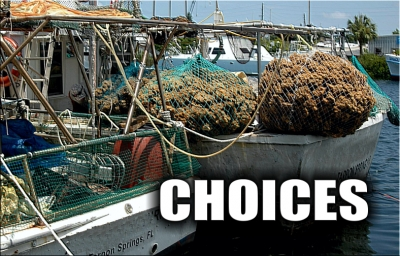 TOO MANY CHOICES